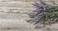 Lavender flowers on wooden background. Vintage still life Royalty Free Stock Photo