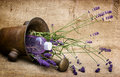 Lavender and lavender oil Stock Photos