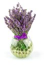 Lavender natural flowers in bowl with water balls Royalty Free Stock Photo