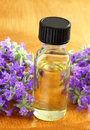 Lavender oil essential in bottle for spa treatment surrounded by fresh cut flower sprigs Stock Image