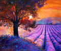 Lavender original oil painting of fields on canvas rich golden sunset landscape modern impressionism Stock Photos