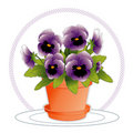 Lavender Pansies in Flowerpot Stock Images