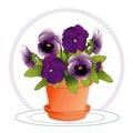 Lavender pansies purple Royaltyfri Bild