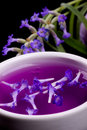 Lavender tincture Royalty Free Stock Photography