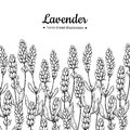 Lavender vector drawing border. Isolated wild flower and leaves. Herbal engraved style illustration. Royalty Free Stock Photo