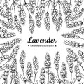 Lavender vector drawing frame. Isolated wild flower and leaves. Herbal engraved style illustration. Royalty Free Stock Photo