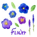 Lavender and viola watercolor collection. Violet flowers set. Vector hand drawn illustration for invitation