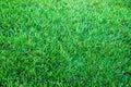 Lawn Royalty Free Stock Photo