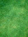 Lawn from cut green herb Royalty Free Stock Photography