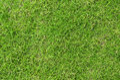 Lawn grass texture closeup of a lush green Stock Photos