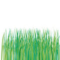 Lawn of green grass Stock Photography
