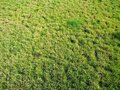 Lawn of a green grass Royalty Free Stock Photography