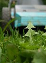Lawn mower dandelion leaf against a Royalty Free Stock Photography