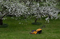 Lawn mower in the garden near blooming apple trees Stock Photo