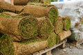 Lawn turf rolls of on a wooden rack Stock Photos