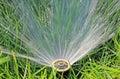 Lawn Water Sprinkler Royalty Free Stock Photo