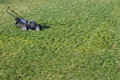 Lawnmower green grass being mowed on a cool summer day Stock Photo