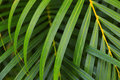 Layers of lush green palm fronds Royalty Free Stock Photo