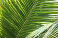 Layers of Palms Royalty Free Stock Images