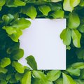 Layout made of leaves with paper card note. Flat lay. Nature concept. Green leaves. Creative layout. Royalty Free Stock Photo