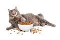 Lazy Cat Eating Big Bowl of Food Royalty Free Stock Photo