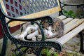 Lazy cat is lying on the bench cute decorative wrought iron Royalty Free Stock Photography