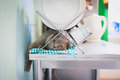 Lazy cat lying under the dish drainer in kitchen Stock Images