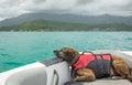 Lazy dog on a boat Royalty Free Stock Photo