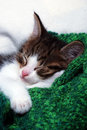 Lazy Kitten Royalty Free Stock Photos