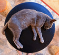 Lazy table cat crazy lying outside on a small on the island zakynthos greece Royalty Free Stock Image