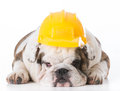 lazy working dog Royalty Free Stock Photo
