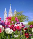 Lds temple salt lake city sacred purple pink red flowers peaceful comforting quiet public beautiful holy trees serene scenic Royalty Free Stock Image