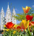 Lds temple salt lake city sacred yellow red flowers peaceful comforting quiet public beautiful holy trees Royalty Free Stock Photography