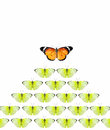Leadership of butterfly isolate on white background Stock Photos