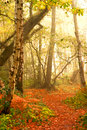 Leading into autumn forest Royalty Free Stock Photo