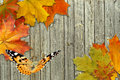 Leaf autumn maple and butterfly Royalty Free Stock Photo