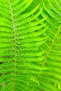 Leaf background fresh green for Royalty Free Stock Image