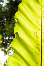 Leaf background green nature Royalty Free Stock Photos