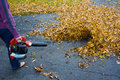 Leaf blowing Royalty Free Stock Photography