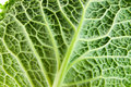 Leaf of Cabbage Royalty Free Stock Images