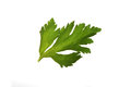 Leaf  celery Royalty Free Stock Images