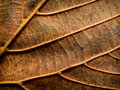 Leaf closeup nature detail Royalty Free Stock Photo