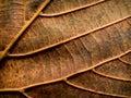 Leaf closeup nature detail Royalty Free Stock Photo
