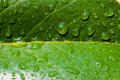 Leaf Closeup with Water drops Royalty Free Stock Photos