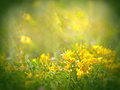Leaf of clover in focus and little yellow flowers out Royalty Free Stock Photos