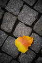 Leaf on cobblestones single autumn with raindrops against cobblestone background Royalty Free Stock Photos