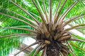 Leaf of coconut tree ant view Royalty Free Stock Images