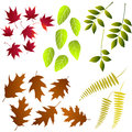 Leaf collection for designers vector set Royalty Free Stock Photography