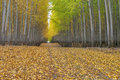 Leaf covered country road with autumn leaves fall goes through a forest Royalty Free Stock Photography