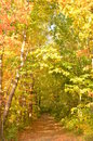 Leaf covered path in the woods in Autumn Royalty Free Stock Photo